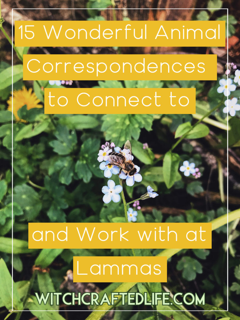 15 Wonderful Animal Correspondences to Connect to and Work with at Lammas / Lughnasadh