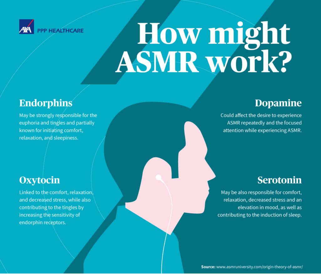 How ASMR Might Work