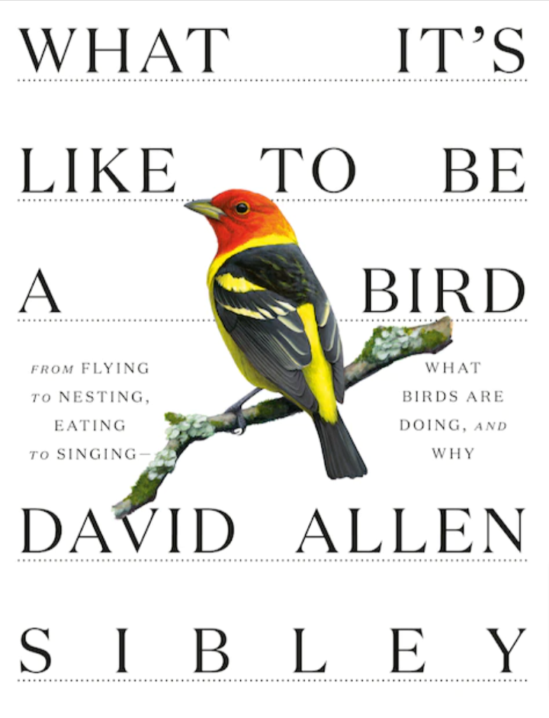 What It's Like to Be a Bird: What Birds Are Doing and Why by David Allen Sibley